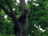 Inwood Residents Rescue Kitten Stuck in Tree