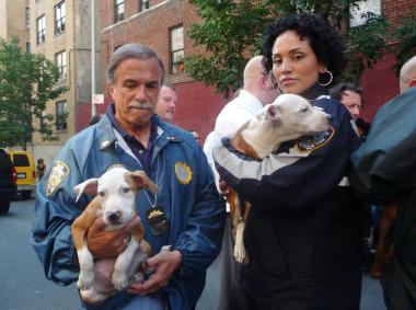 Police rescued 47 pit bulls, allegedly used in a dog fighting ring, from the basement of a Bronx apartment building at 1245 Sherman Ave. on June 21, 2012.
