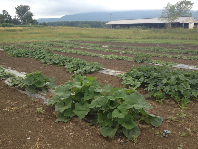 The farm in upstate New York where Sam Wohabe helps out during the summer.