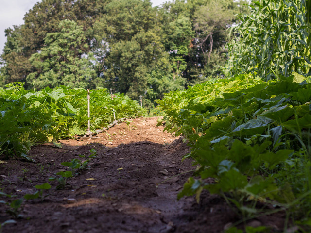 El Poblano Farm, New Springville, has an acre in Staten Island and three acres in New Jersey, but hopes to expand seven more acres in Jersey using Kickstarter.