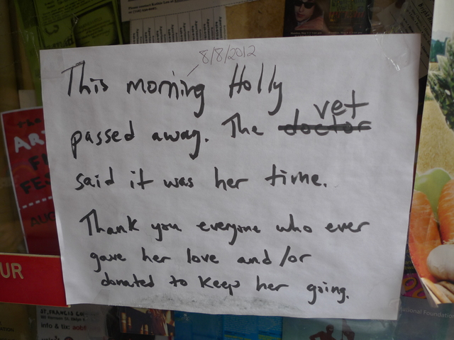 So many people were concerned about the health of Holly, the store cat at Babbo's Books in Windsor Terrace, that owner Leonora Stein posted a sign in the window when the cat passed away.