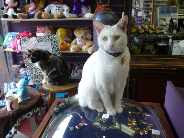Sushi, a store cat at the Hallmark store on Prospect Park West in Windsor Terrace. Her companion Tiffany is in the background.