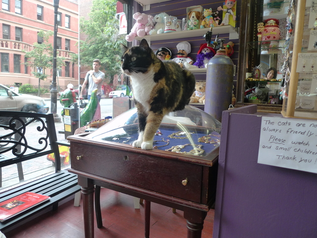 Tiffany, a calico cat who lives at the Hallmark store in Windsor Terrace, helps guard the jewelry case.