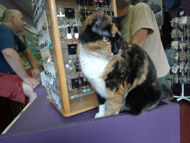 Tiffany, a calico cat who lives at the Hallmark store in Windsor Terrace.