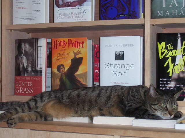 Holly Golightly, the store cat of Babbo's Books on Prospect Park West in Windsor Terrace. She passed away in August 2012.