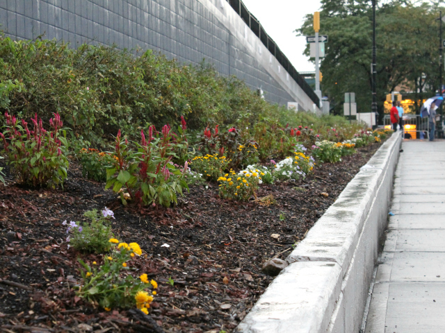 Five Bronx teens in the city's Summer Youth Employment Program replaced knee-high weeds with colorful mums, pentas and violas.