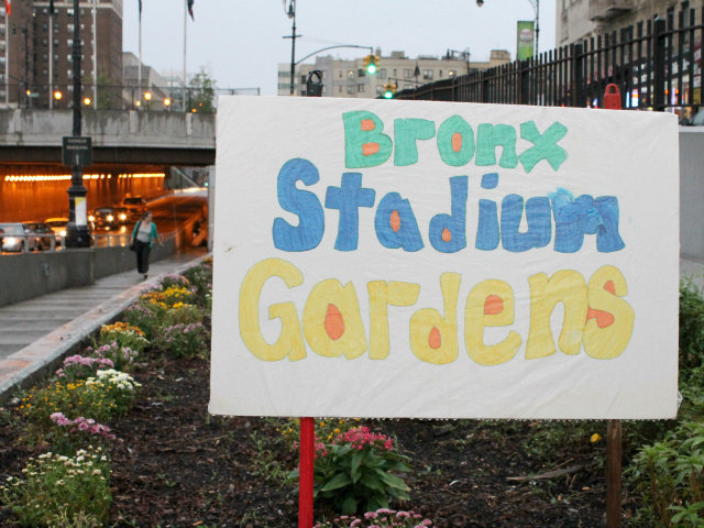 "Since taking responsibility for the flowerbeds along 161st St., the local BID has cleared out the weeds, planted flowers and renamed the plots, ""Bronx Stadium Gardens."""