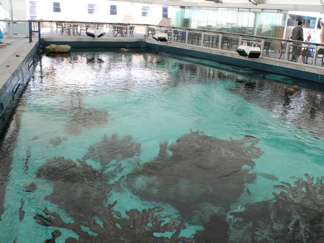 The New York Aquarium's existing shark tank, as seen from above.