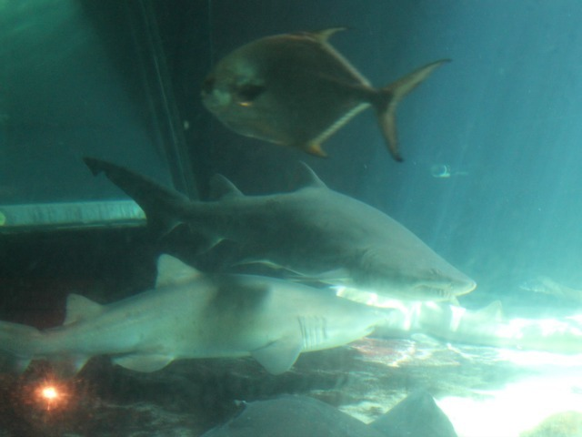 When it's done, the new shark exhibit will feature 40 of the terrifying predators.