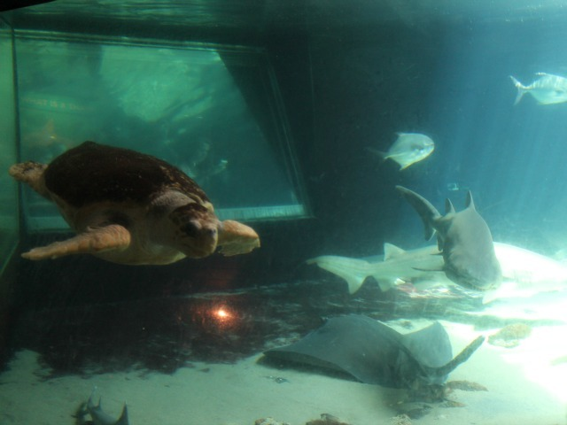 The aquarium hopes to better integrate the attraction with the rest of Coney Island.