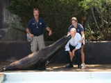 Mayor Bloomberg Gets Smooched by Osborne the Sea Lion