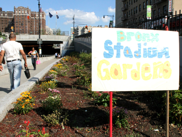 Since taking responsibility for the flowerbeds along 161st St., the local BID has cleared out the weeds, planted flowers and renamed the plots,