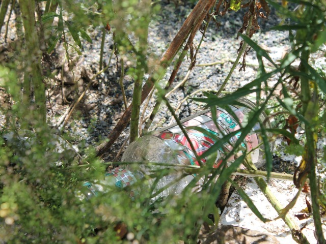 Bottles are strewn amid the weeds in the West Street medians.