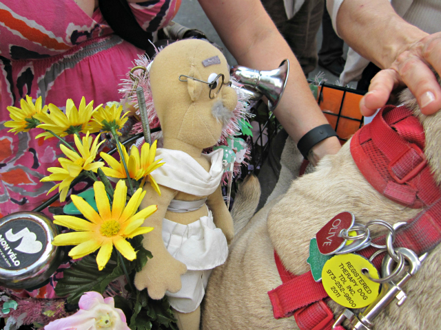 Olive the peace pug was keeping company with a stuffed animal of Gandhi in the basket of Nadette Stasa's bicycle.