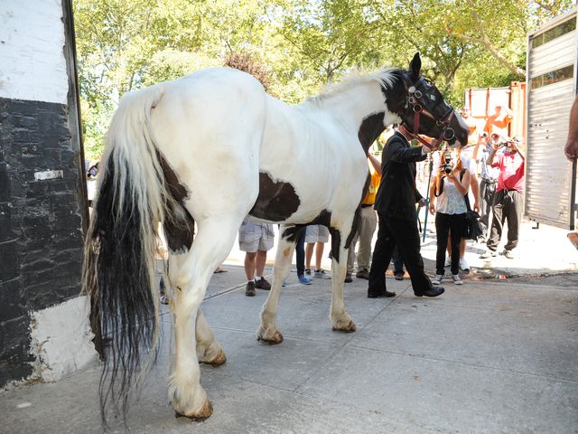 Steve Malone, spokesperson for the Horses Carriage Association of New York, leads Oreo to his waiting transport vehicle at the Clinton Park Stables on Wednesday August 29th, 2012.