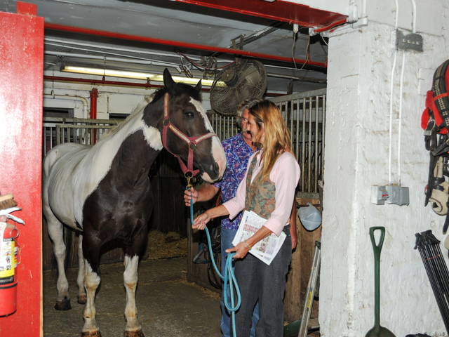 Pamela Rickenbach of Blue Star Equiculture leads Oreo from his stall at the Clinton Park Stables on Wednesday August 29th, 2012.
