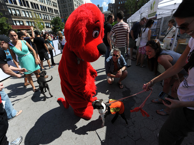 Clifford meets new buddies at the Adoptapalooza for homeless pets in Union Square, September 9, 2012.
