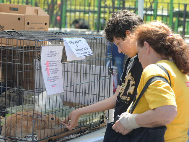 Visitors to Adoptapalooza on September 9, 2012, visit with Chocolate, a fawn-colored bunny.