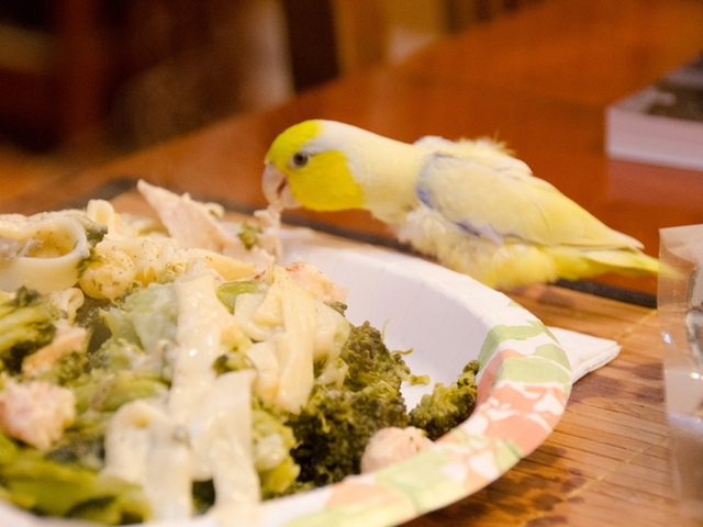 While Ephraim eats specialty bird pellets, he also eats human food such as vegetables, meat and bread.