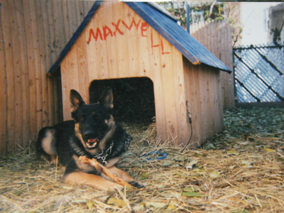 Maxwell outside his house in his owner's backyard.