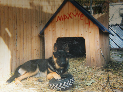 Maxwell as a puppy outside his doggy house in his owner's backyard.