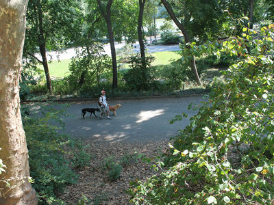 A man raped and robbed a 74-year-old woman Wednesday in Central Park near Strawberry Fields.
