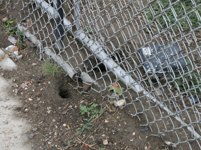 A rat hole next to the parking lot behind Robert Fulton Terrace.