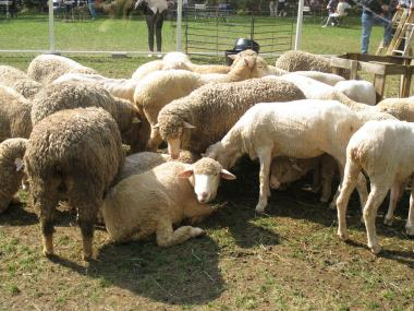 The event was part of the British-born Campaign for Wool, which seeks to promote the wool industry.