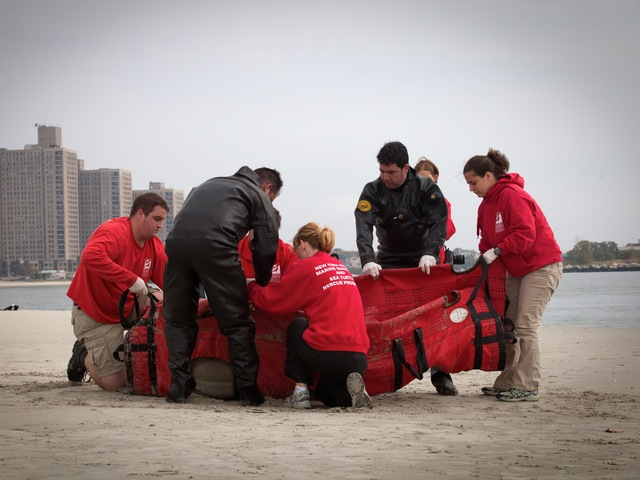 Workers carried the dolphin in the Rockaways on Sept. 28, 2012.