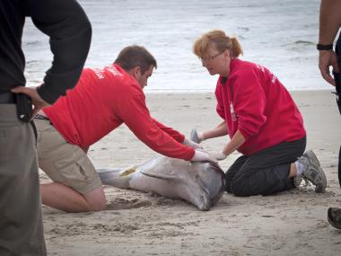 Authorities are investigating a dolphin that washed shore in a creek off Shell Road.