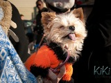 'Howl-i-day' Party, Costume Contest Organized for Local Pooches