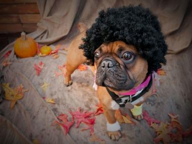 Dozens of pooches will participate in an annual Halloween doggie parade in Hunters Point.