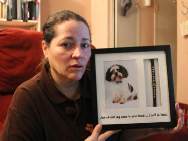 A woman said her beloved dog was snatched up off the streets of Chelsea.