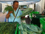 Bronx Farm Share Offers Fresh Produce With Payment Flexibility