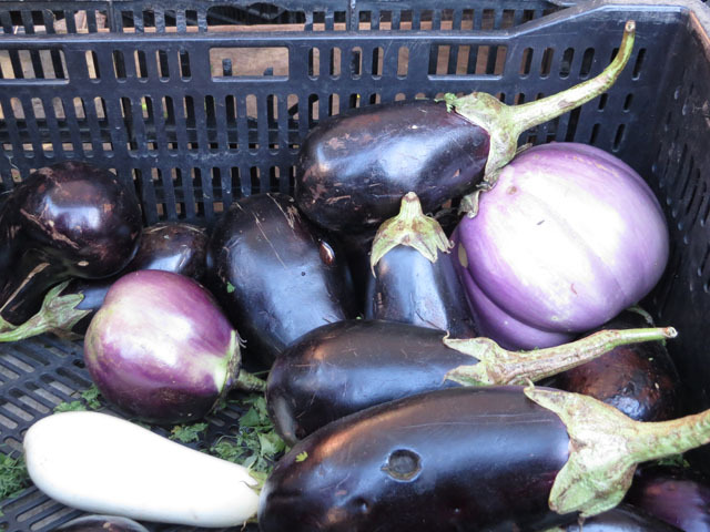 Eggplant were just some of the delicacies on display at Harlem's first-ever nighttime farmers market on Oct. 11, 2012.