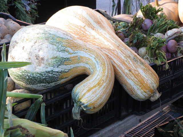 <p>Shoppers could select from many varieties of squash at Harlem&#39;s first nighttime farmers market on Oct. 11, 2012.&nbsp;</p>