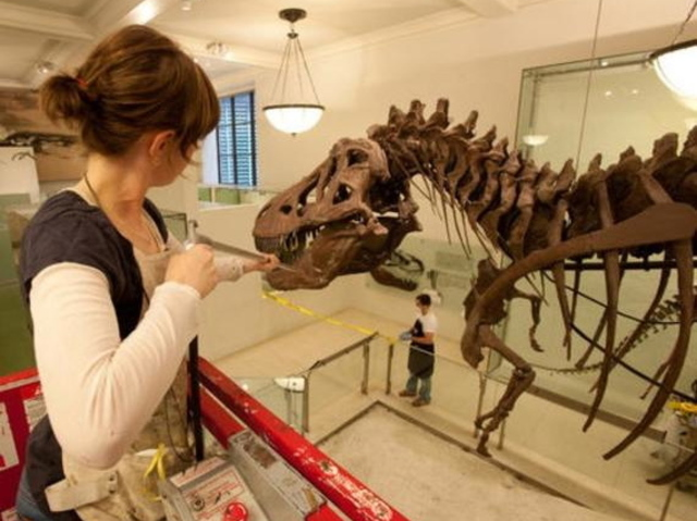 <p>Exhibits at the Museum of Natural History often blend the ideal mix of science and art, Susan Anderson said, who is spearheading efforts to create a North Brooklyn museum.</p>