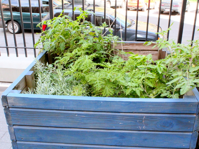 <p>School principal Darlene Despeignes, is working on developing a student-run garden at the S.T.A.R Academy on East Fourth Street.</p>