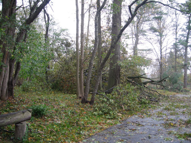 <p>Downed trees at the Bartow-Pell Mansion Museum.</p>