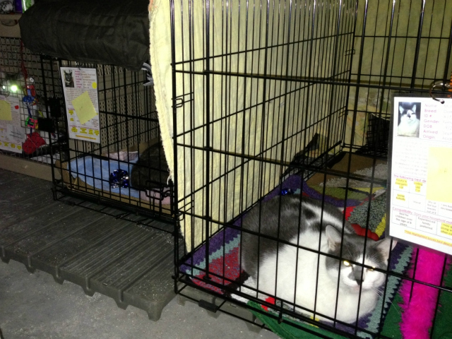 <p>The 70 cats that were in Bideawee&#39;s Manhattan shelter were moved to the facility in Wantagh a few days after the storm.</p>