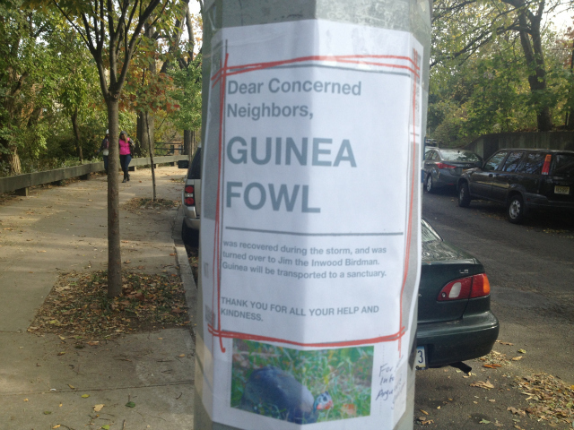 <p>Nelson Garo and Elizabeth Sovinsky posted signs about the guinea hen after catching it the day after Hurricane Sandy on Nov. 1, 2012.</p>