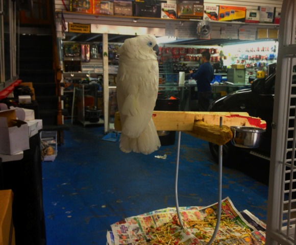 <p>JV Pet Shop shares space with JV Auto Sound at 248 West Fordham Road in The Bronx.</p>