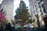 Christmas Tree Lighting Expected to Cause Major Gridlock in Midtown