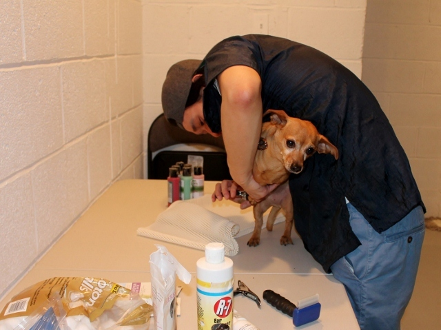 <p>Brownie the Chihuahua gets her nails clipped. Brownie was one of The Salty Paw&#39;s first customers when it reopened at a temporary space in the Seaport Animal Hospital.</p>
