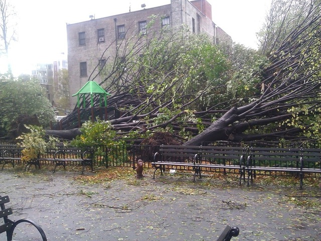 <p>Fallen linden trees at Andrews Grove Playground on 49th Avenue in Hunters Point shortly after Hurricane Sandy.</p>