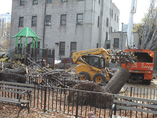 <p>Workers removed the trees on Thursday.</p>