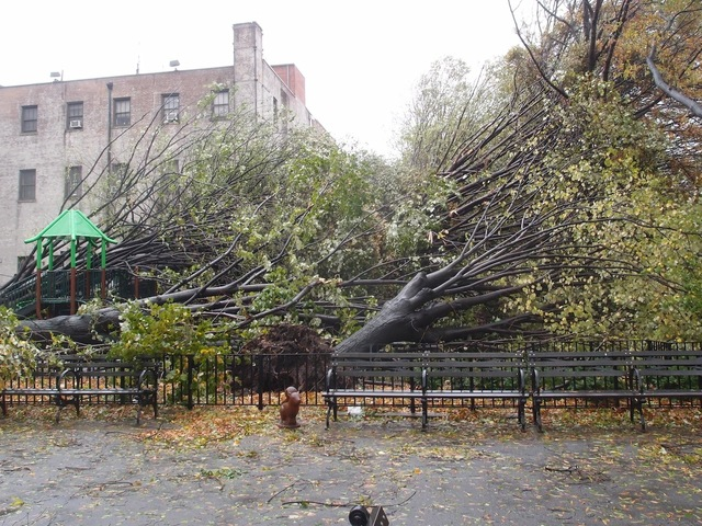 <p>Fallen trees in &quot;Shady Park&quot; shortly after Hurricane Sandy.</p>
