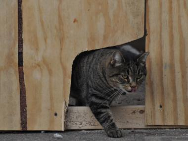"Demolition has begun on the Williamsburg waterfront's former ""Monster Island,"" where feral cats live."