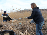 Uptown Wetlands Slowly Recover From Hurricane Sandy