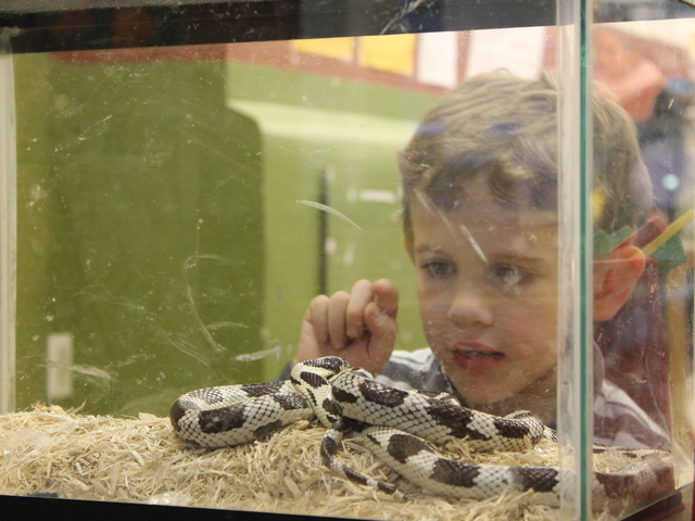 <p>A child examines a snake in Storefront Science&#39;s critter corner.</p>
